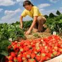 На Тернопільщині 22% вакансій - у сільськогосподарській сфері